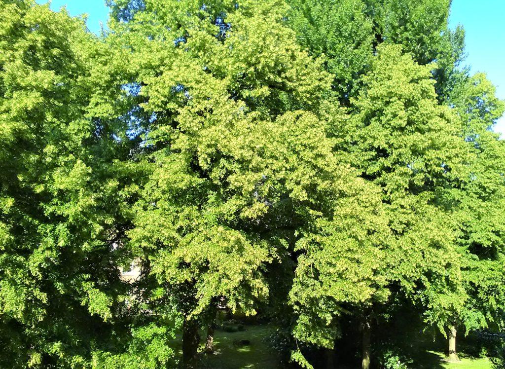 Blick auf hochgewachsene Bäume. Im Vordergrund rechts unten ansatzweise der Rand einer Balkonmauer
