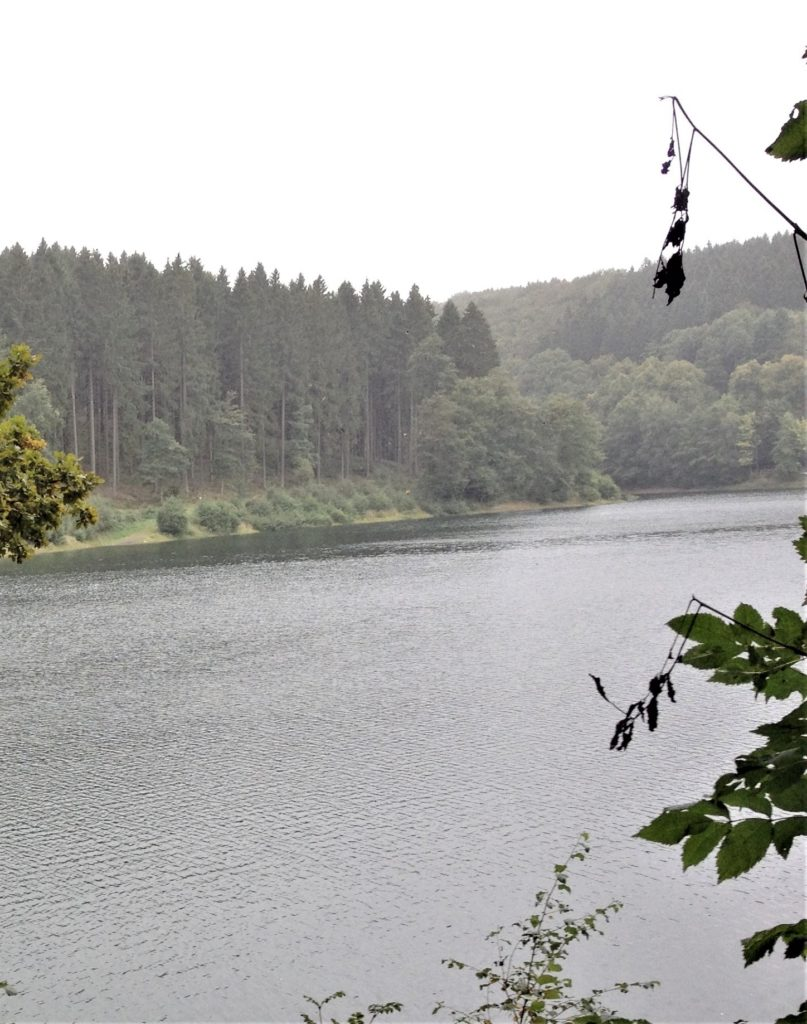 See mit Bäumen im Hintergrund. Auf der rechten Bildseite im Vordergrund einige Blätter, die fast zu Boden zu fallen scheinen