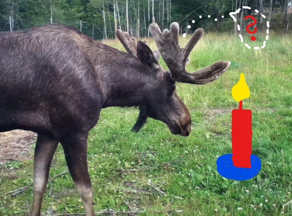 Elch mit Fragezeichen in einer Gedankenblase steht vor einer Kerze