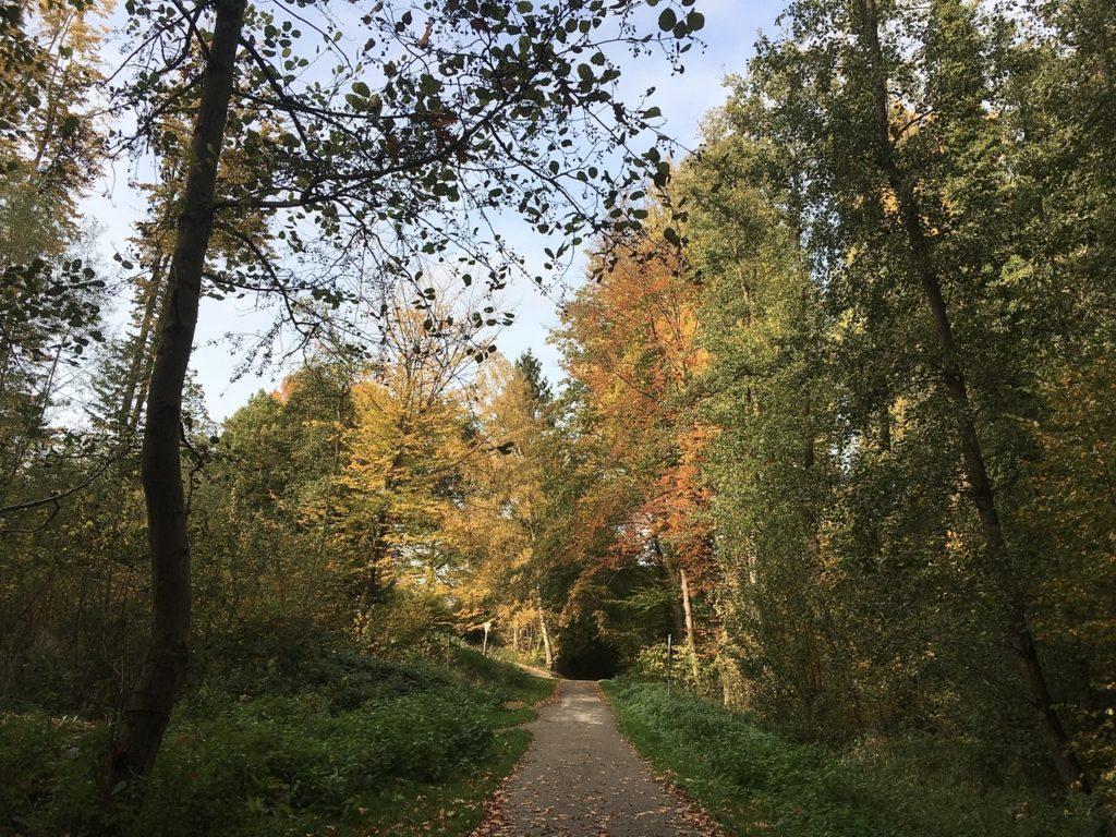 Fußweg mit Bäumen in grünen, gelbe und roten Farben