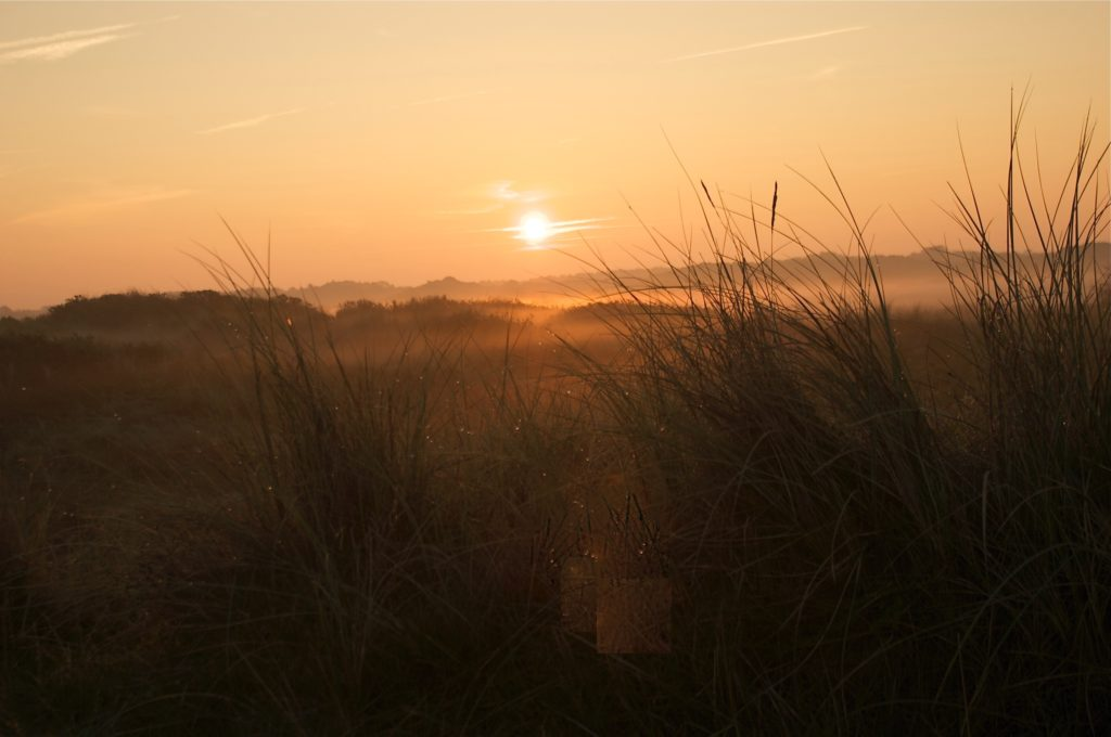 Sonnenaufgang mit Dünengräsern im Vordergrund